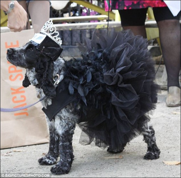 This four-legged friend went as Natalie Portman's Black Swan