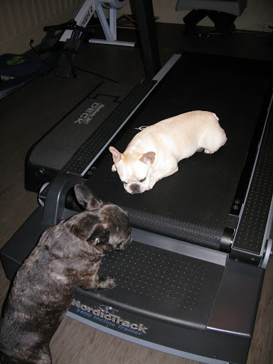 Excuse me, Sharkey!  This is not how you use a treadmill!  We're not done exercising!