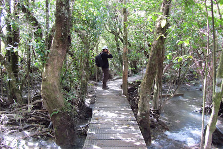 24 Tongariro Crossing, prin padurea de la finalul traseului.JPG