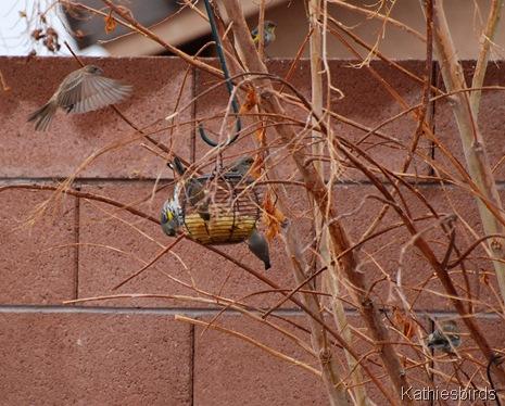 13. warblers n verdin-kab