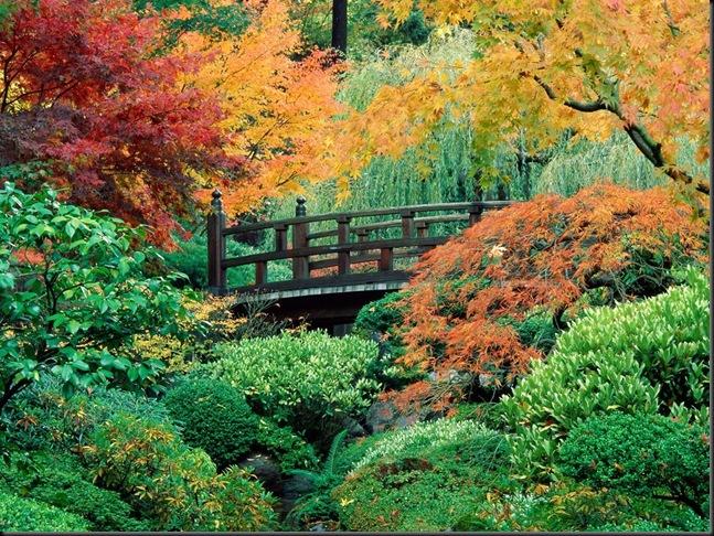 autumn-scene-wallpaper-12-10664