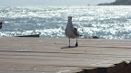 I even told this here seagull ( I named him Stanley)  all about the great humans who I know through the Daily Wag!