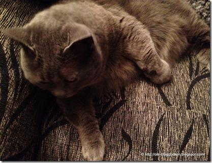 Katt ormbiten1
