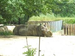 2009.05.22-006 rhinocéros