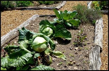 04b - Big Cabbages