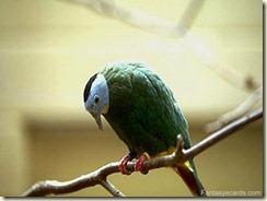 002-sad-bird