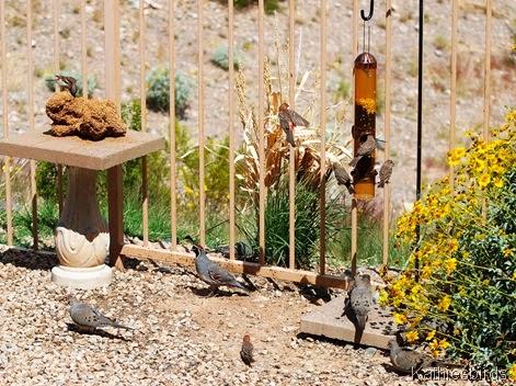 7. corona de tucson yardbirds spring 2009-kab