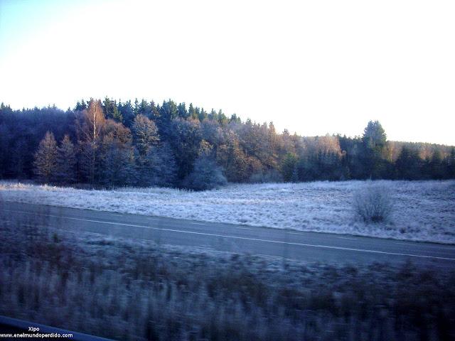 bosques-nevados-de-suecia.JPG