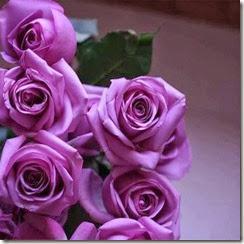 Rosas moradas