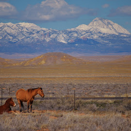 In the Sun by Art Brokop - Animals Horses ( horses, ute mountain )