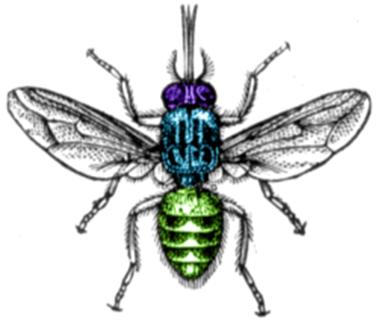 Amazing Pictures of Animals, Photo, Nature, Incredibel, Funny, Zoo, Tsetse fly, Glossina, Arthropoda, Alex (1)