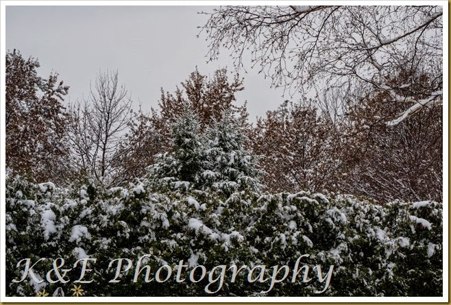 NOVEMBER 2014 (2 of 2)-2