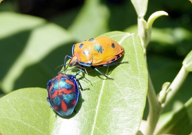 Beautifully coloured bugs