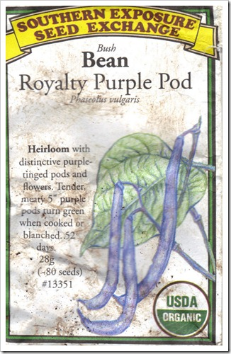 purple pod beans