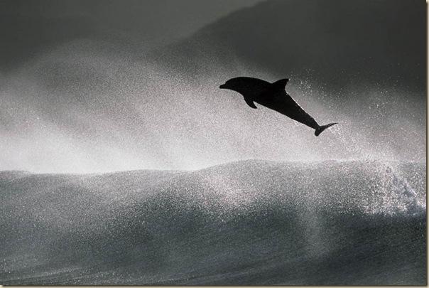 Danse avec les dauphins (3)