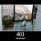 401.jpg