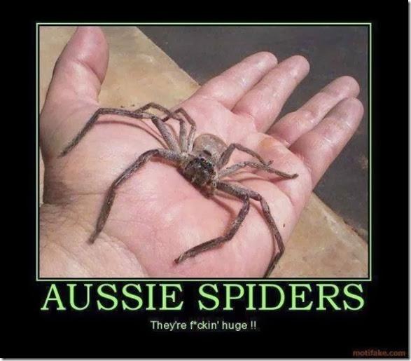 australia-scary-spiders-008