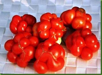 Tomato Reisetomate