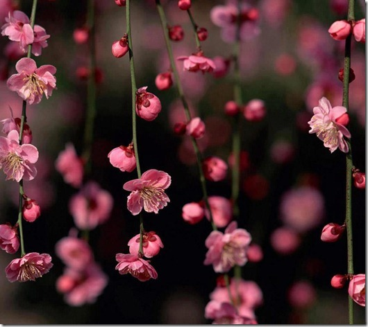 flores-facebook-tumblr-rosas-las flores-fotos de flores-770