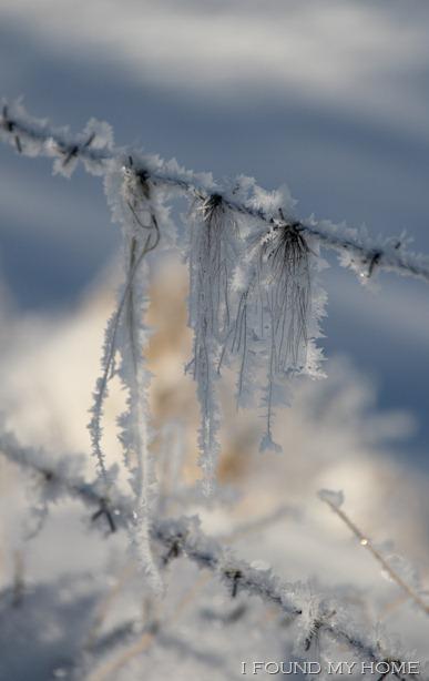 sneeuw Febr 2012 022 - kopie