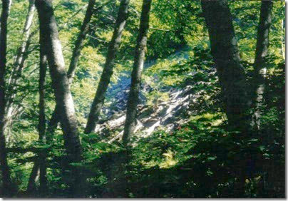Collapsed Snowshed Ruins along the Iron Goat Trail near Martin Creek in 2000