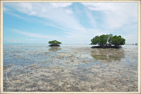 trees of Starfish Island