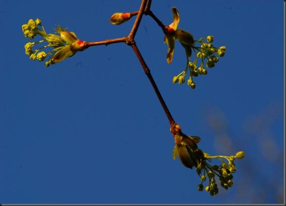 hanne  puun kukat 041