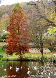 rouelles automne 029-001