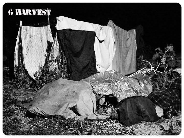 6 harvest