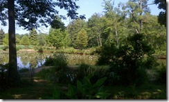 Kenilworth Aquatic Gardens with Lev and Kids (2)