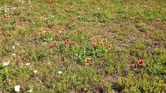 Red and Orange Wildflowers