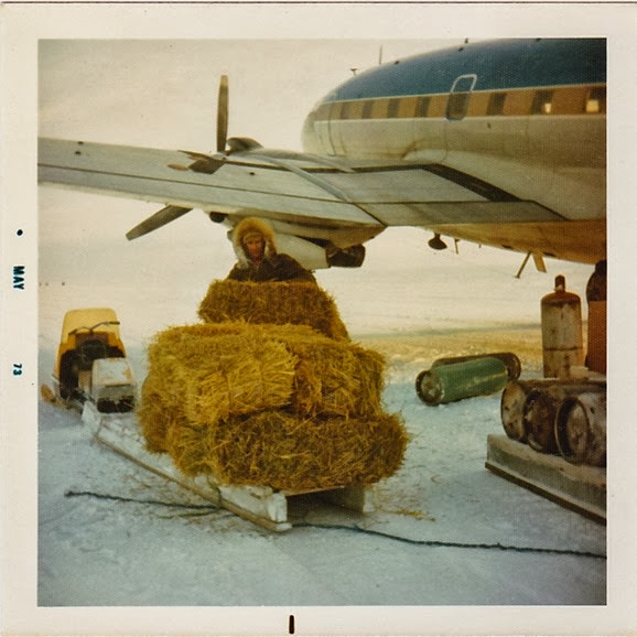 Unloaded hay for goats_1973