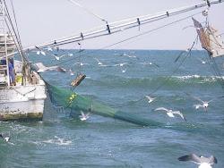 Shrimp Boat1.jpg