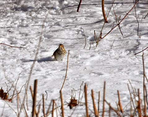 7. searching for food in the snow-kab