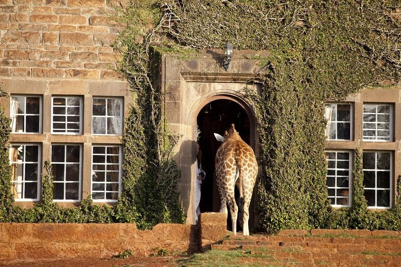giraffe-manor-2