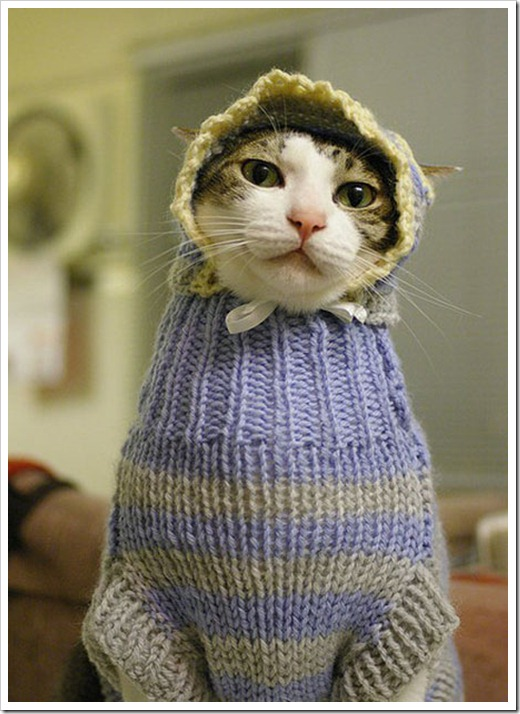 Cat dressed as a baby