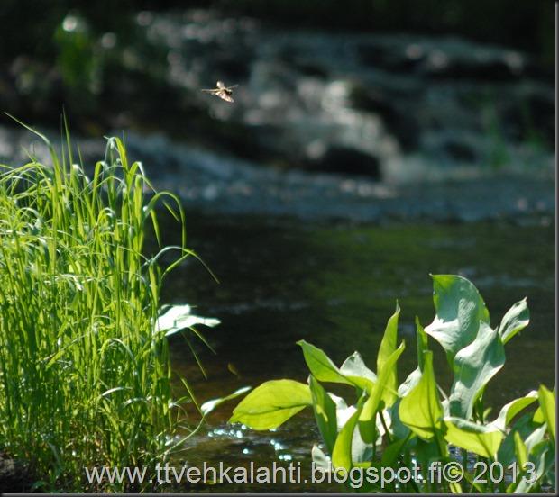 katuvalon vaihto sudenkorento super-komura 086
