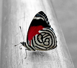 Butterfly Art. Beautiful Butterfly Art