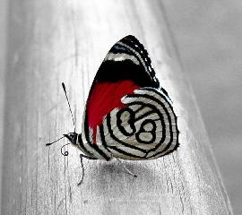 Butterfly Art. Beautiful Butterfly Art