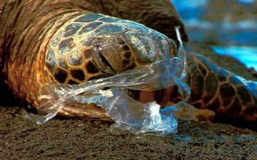 turtle_plasticbag031-600x375