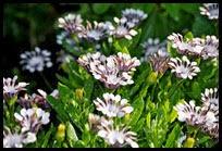 01c-flowers