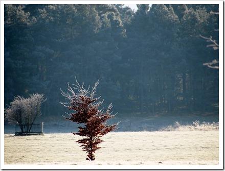 15 Jan 7 15-01-2012 12-34-29