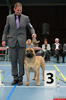 20130511-BMCN-Bullmastiff-Championship-Clubmatch-2132.jpg