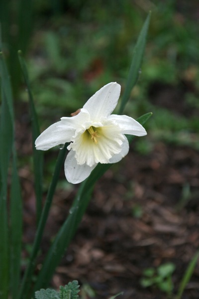 Daffs6