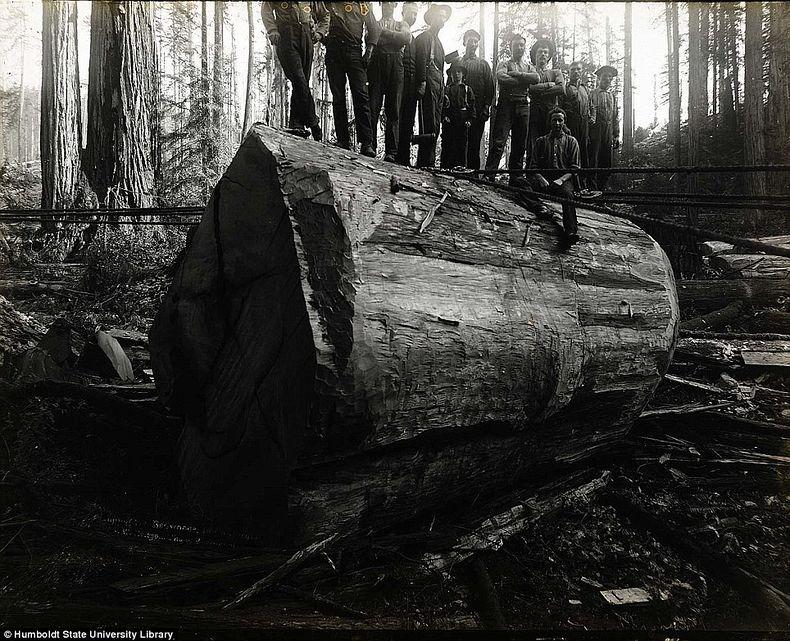lumberjacks-redwood-5