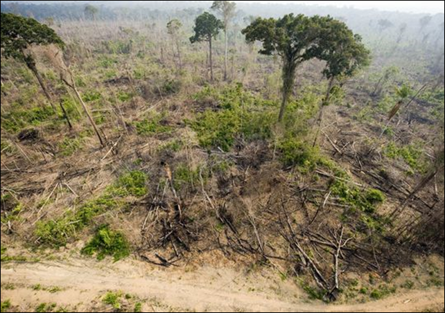 A burnt out section of the Jamanxim National Forest in the Amazon state of Para, northern Brazil. Photo: Antonio Scorza / AFP / Getty Images