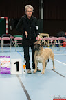 20130510-Bullmastiff-Worldcup-1015.jpg