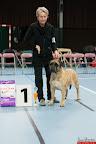 20130510-Bullmastiff-Worldcup-1015.jpg