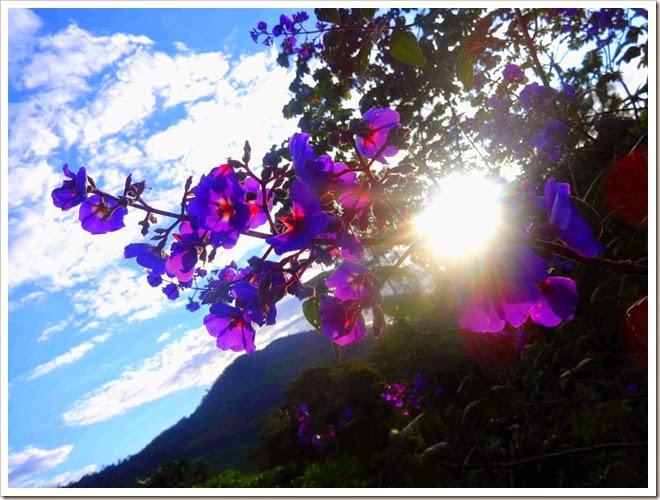 lindo por do sol