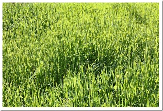 120223_grass